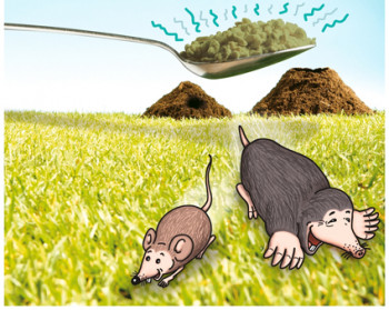 Defense against mole and vole